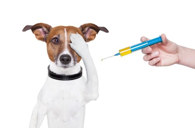 ブースター接種時期の改訂と狂犬病ワクチンの今後の課題