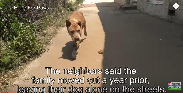 引っ越しで置き去りにされた犬は、孤独の中で石を食べていた