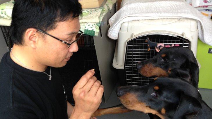 愛犬との主従関係を作ろう!良い関係を築く4つのテクニック