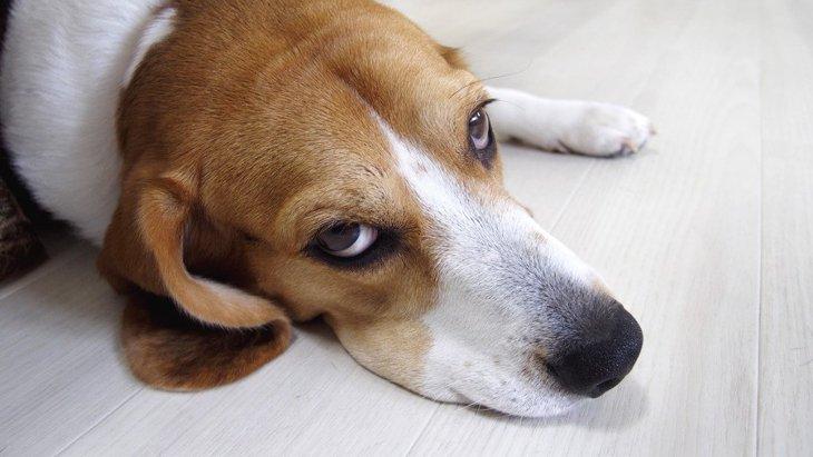 愛犬は嫌がってるかも!犬の飼い主のNG行為6つ