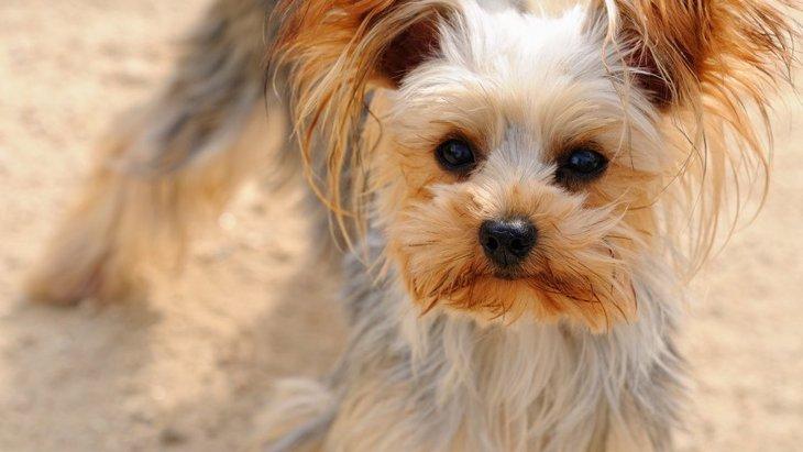 犬の毛ヅヤが悪くなるダメな生活習慣3選