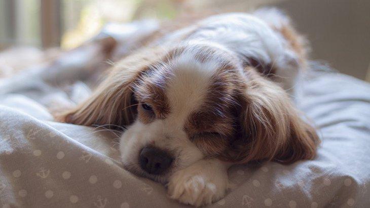 よく眠れてる?寝相から分かる犬の安眠チェック4つ