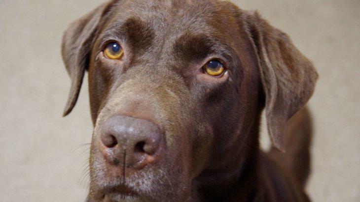 犬が『絶対に許せない』と思っている飼い主の行動5つ