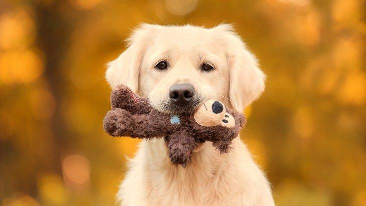 犬はぬいぐるみにどんな感情を抱いているの?離さない時の心理は?