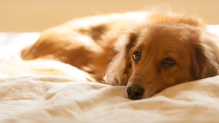 犬が『風邪』をひいた時の初期症状2つ!悪化するとどうなる?