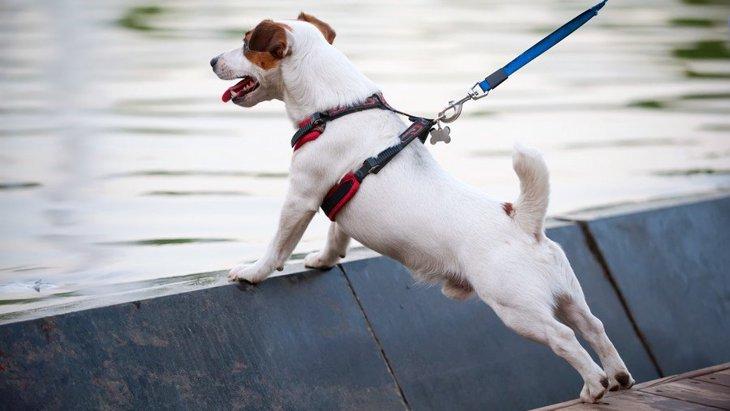 犬の散歩グッズおすすめ18選!リードや首輪から便利な収納バッグまで