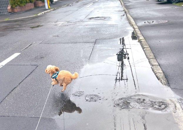 「え?約束?何のこと?」水たまりを跳ねるイッヌがSNSで話題!