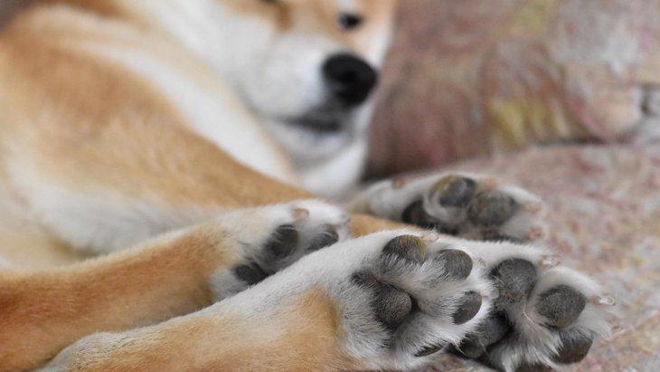 犬の肉球で体調がわかる!?4つの判別方法と適切な予防法