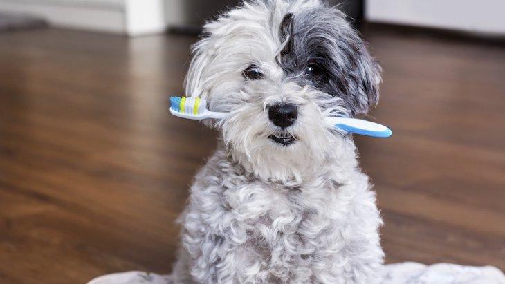犬の口内トラブルに気をつけて!チェックする場所と4つのケア方法