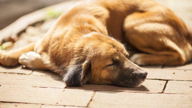 犬の反応から読み取れる8つの病気