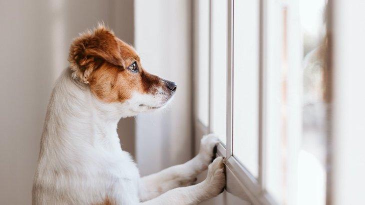 犬が家の中にいたい時にしている仕草や行動3選
