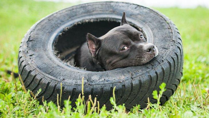 犬が呼びかけを無視するときの心理5つ