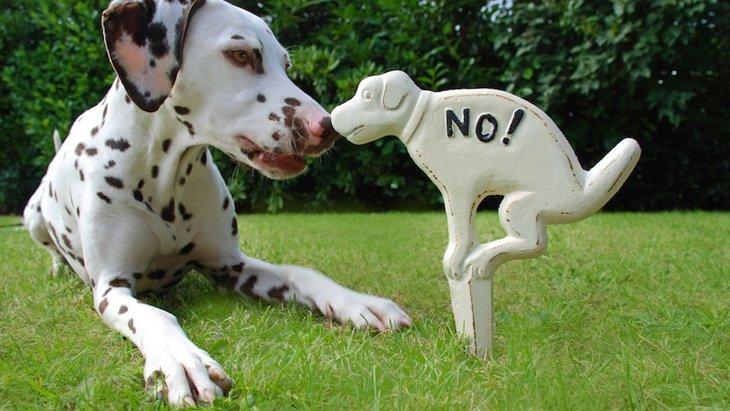 「犬税」がある国4選!世界と日本の違いとは