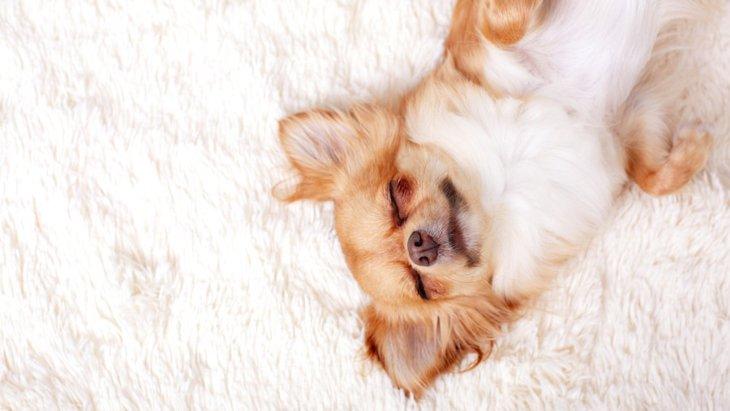 寒い季節に大活躍!「犬用ホットカーペット」人気ランキング【2018年版】