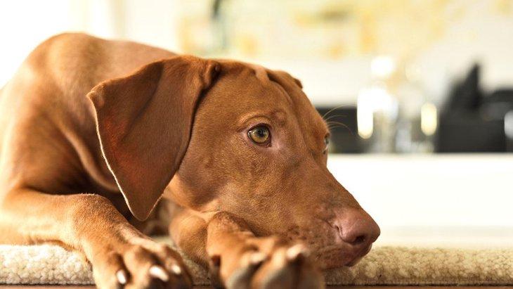 犬にとって『フローリング』は危険?考えられる3つのリスクと対処法