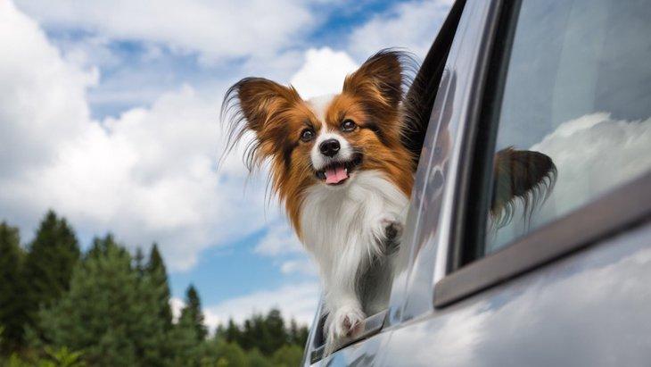 犬を飼う自信がない人が知っておきたい3つのこと