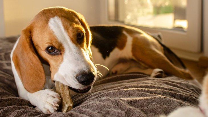 犬におやつを食べさせすぎるとどうなる?考えられるリスクや病気5選