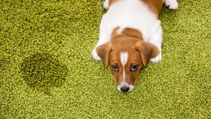犬が粗相をした時にやってはいけないNG行為4つ