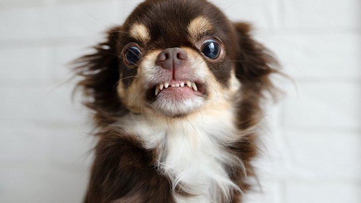 犬の『甘え行動』と『わがまま』の違い