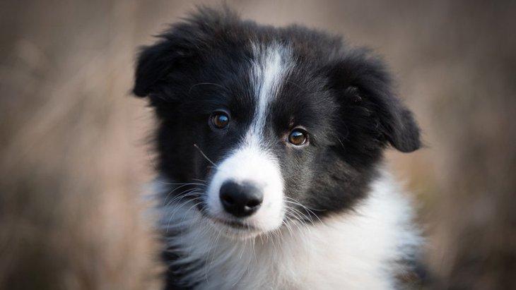 プライドが傷つきやすい犬の特徴7つ