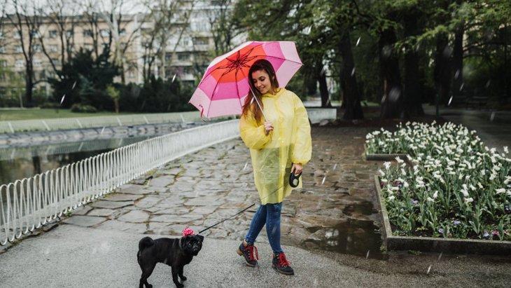 梅雨にありがちな犬のトラブル5選!病気になってしまうNGな過ごし方とは?