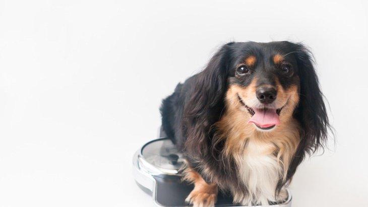 愛犬の太りすぎ・痩せすぎによるリスク