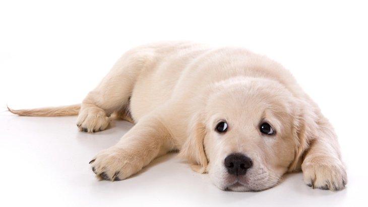【おさらい】犬の仕草から読み取る感情【基本編】