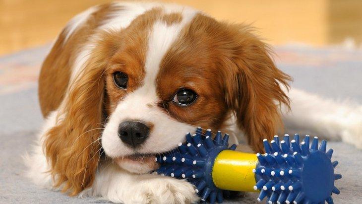 『怒りっぽい犬』に共通している4つのこと