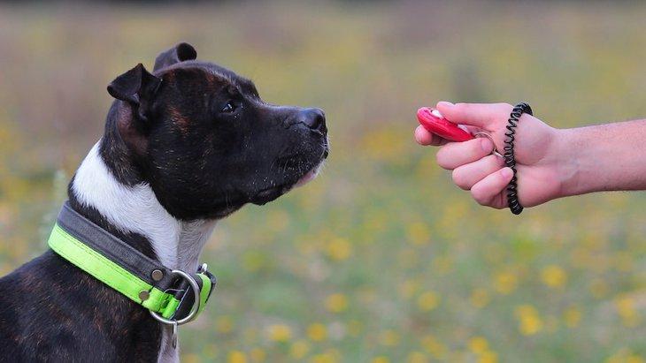 犬のしつけでは何秒以内に褒めるべき?なぜスピードが大切なの?