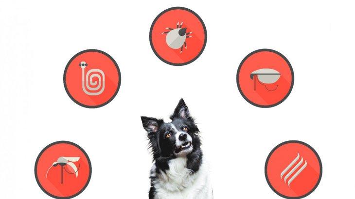 犬鉤虫が駆虫薬に対する耐性を持ち始めたという調査結果