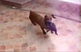 寝る時間よ!子猫をハウスの中へ運ぶワンちゃん