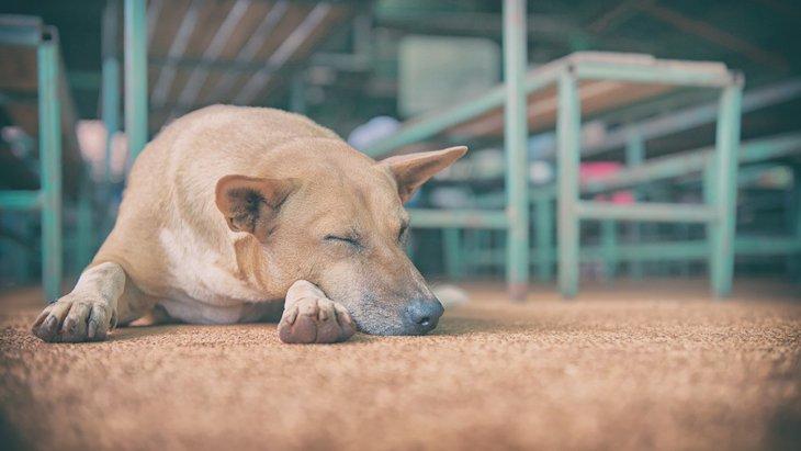 犬のための防災対策!常備するものから調べておくべきことまで