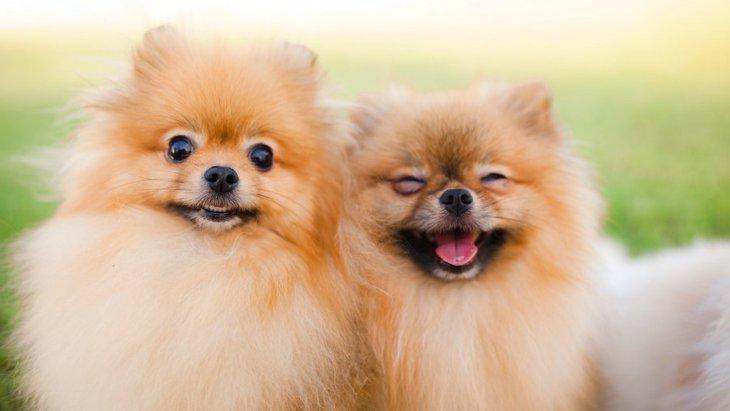 体がころころしていてかわいい犬種4選♡