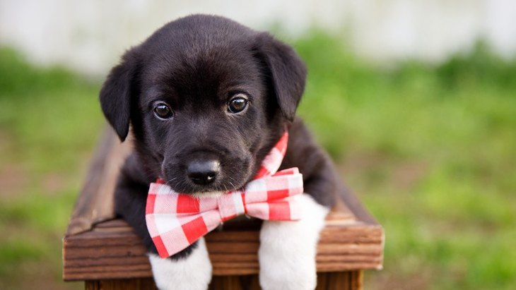 犬を飼う自信がない人が必ずチェックするべき『7つの項目』