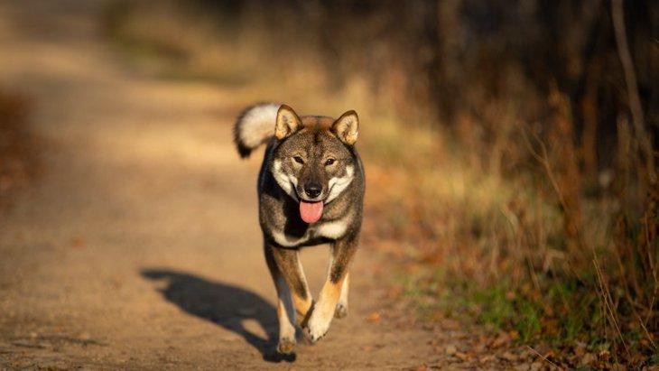 事前の対策を!犬が迷子になりやすいシチュエーション4つ