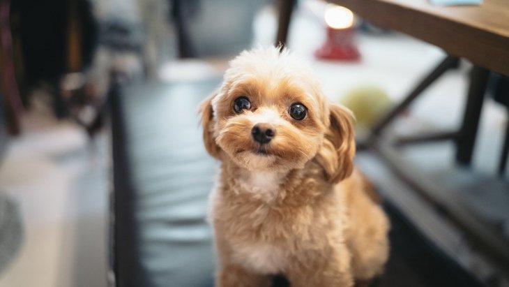 犬がわざとしている策略的行動5選