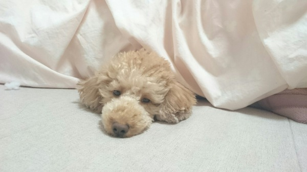 犬と一緒に寝るって本当にいけないこと?危険性と注意すること