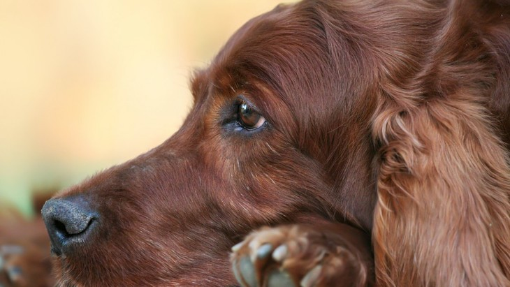 犬が突然固まって動かない時の心理3選!病気の可能性はあるの?