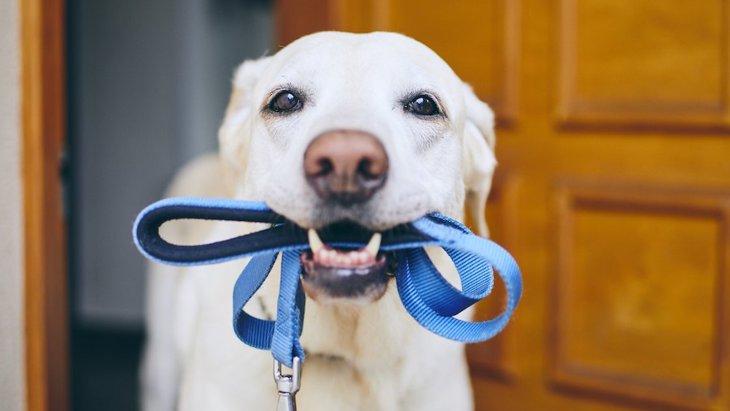 犬が散歩中にリードを噛む心理3選!どうやって対処すべき?