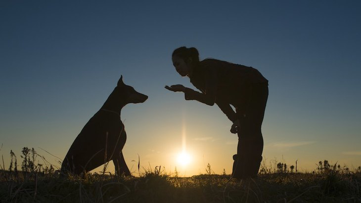 愛犬のしつけに叱ることは本当に不必要なのか?