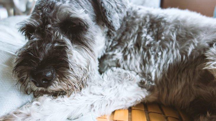 犬の体に異常が出ているときのサイン4つ