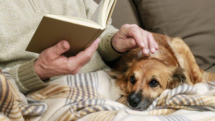 飼い主に従順な犬がよく見せる仕草や行動5選