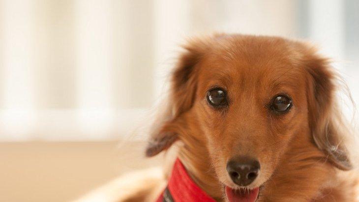 犬にやりたい気遣い7選!生活の質を高めるポイント