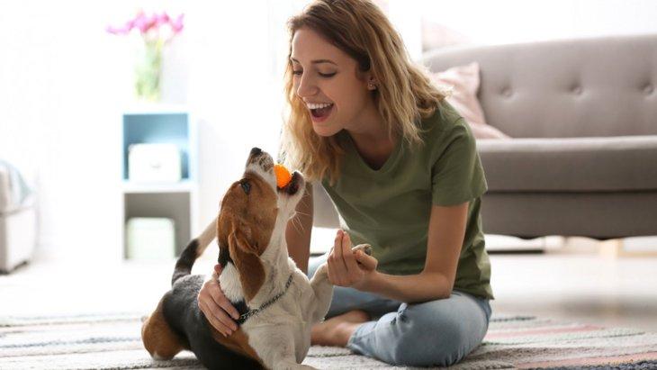 犬が暑さで体調不良になっている時の症状とは?初期症状から正しい対処法まで解説