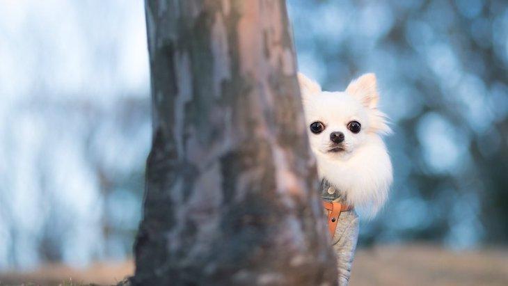 どうしたの?犬が飼い主の後ろに隠れる心理4つ