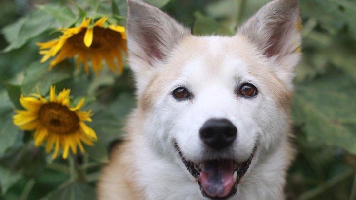 犬の夏バテ防止対策4選