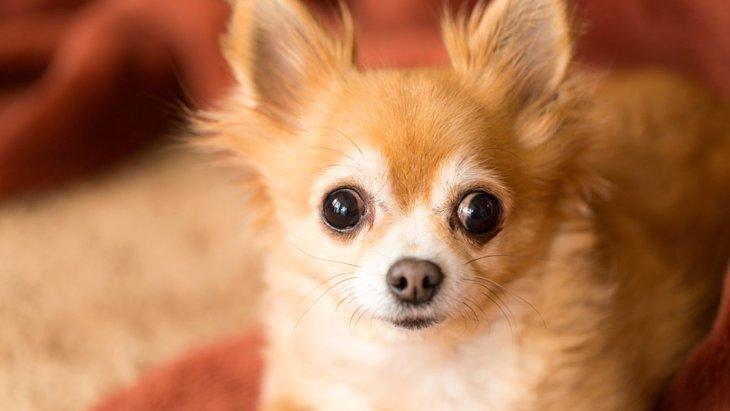 犬が目を閉じられなくなる4つの原因