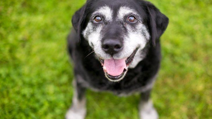 犬が老化している時に見せるサイン5選 シニア犬が見せる独特の行動や仕草とは?