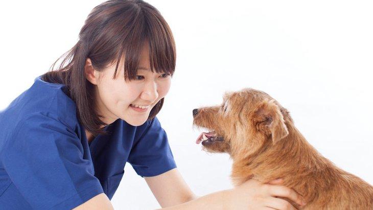 知っていますか?犬の口蓋とその病気