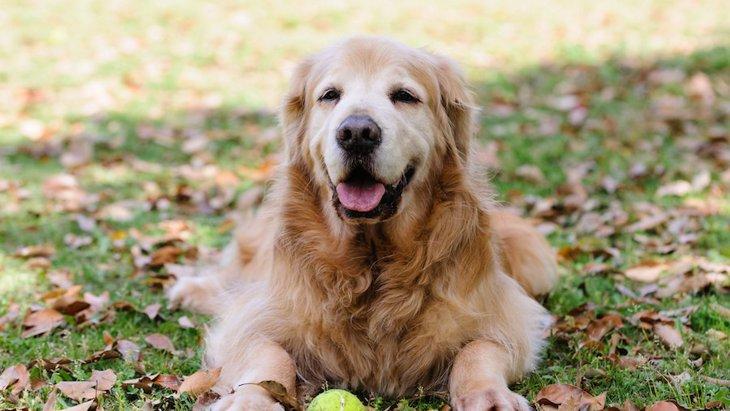 犬の『老化サイン』5選!生活で気を付けるべきポイントは?